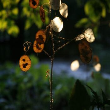 Waldbaden Verspielt und leicht im Licht