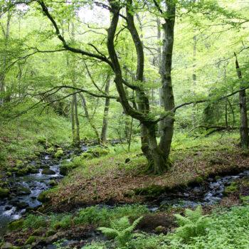 Erlebe Natur - erlebe Waldbaden