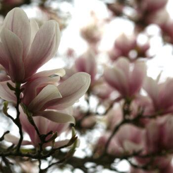 Blüten locken das QI