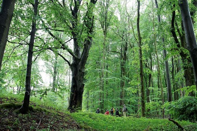 Waldbaden Baumbotschaften